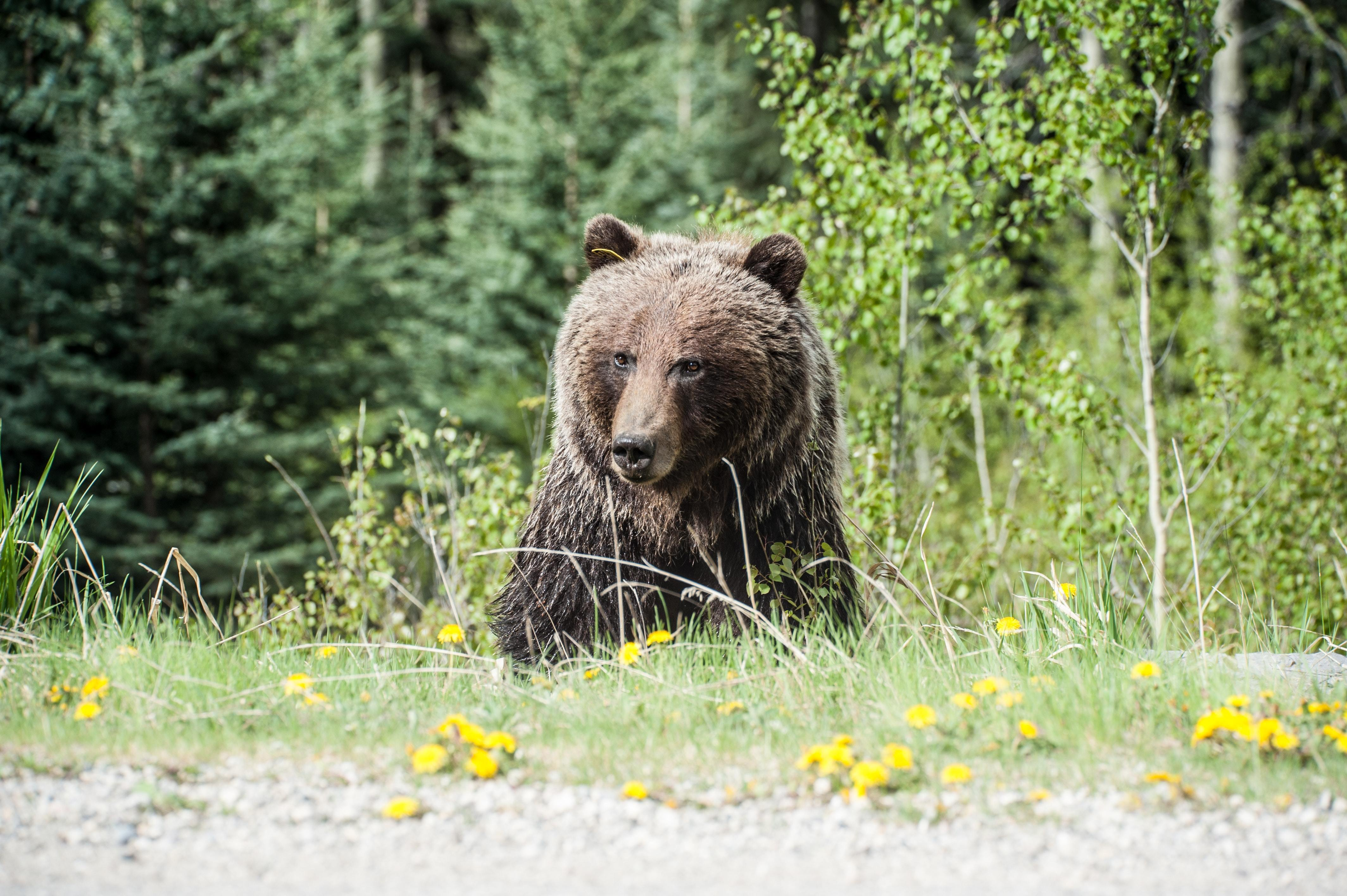 alternative assets in a bear market