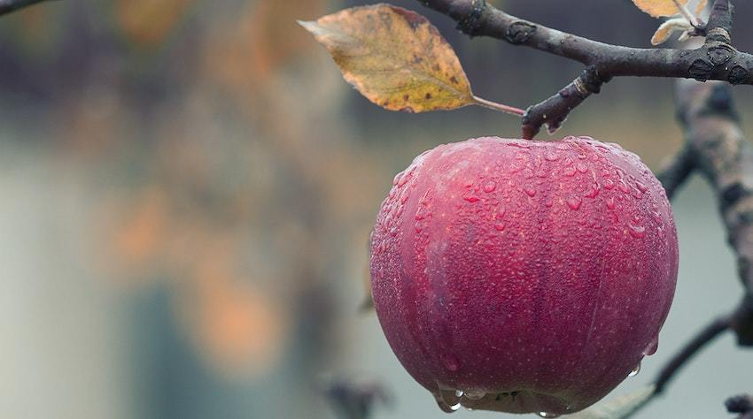 A dewy apple, representing the fruits of your labor as tangible investments, not intangible assets
