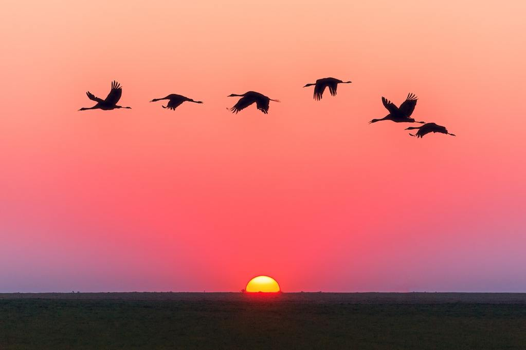 Cranes fly over a sunset, representing the desire for Limited Partners to find an exit strategy before General Partners are ready to sell up in private equity