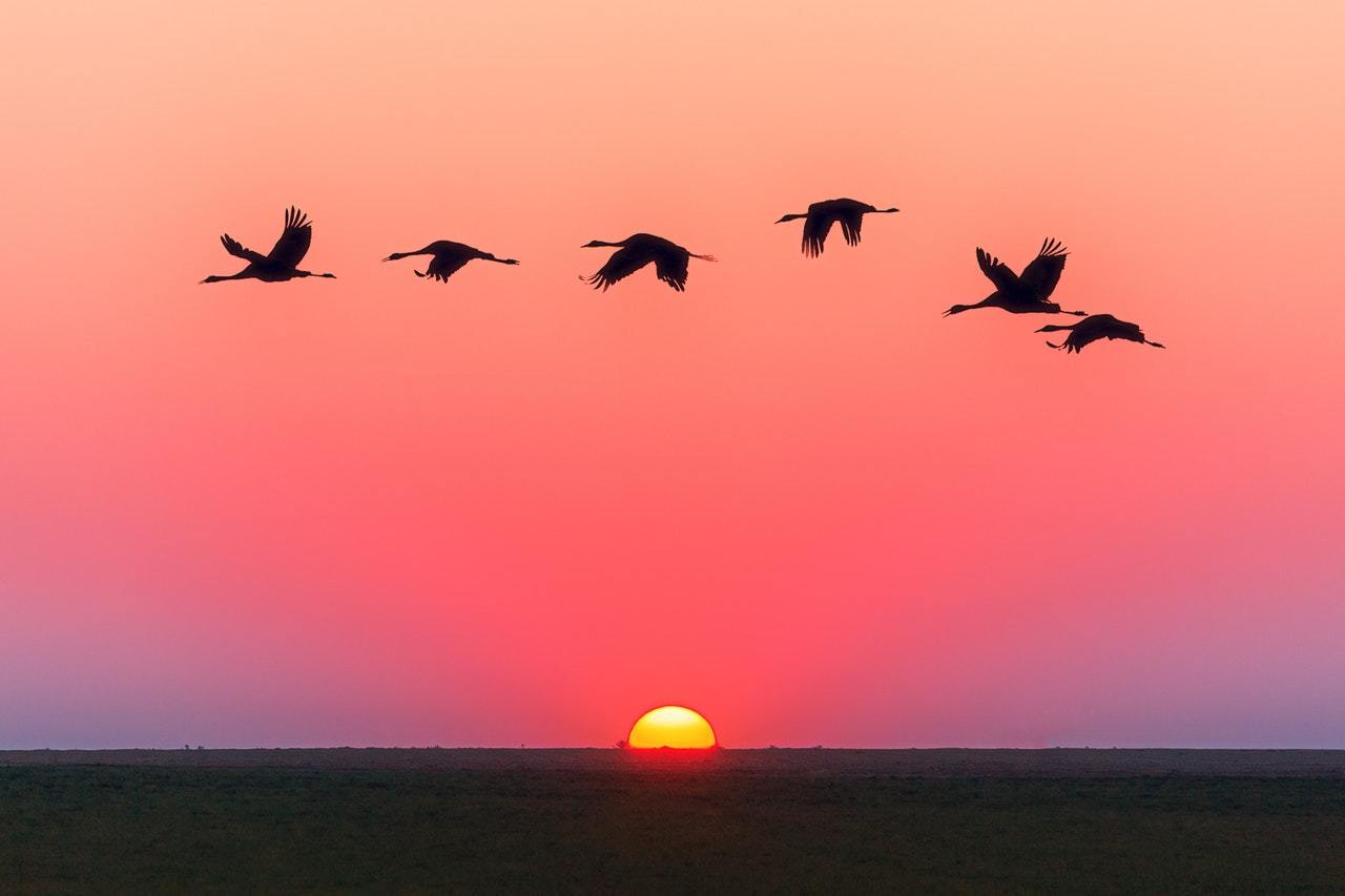 Cranes fly over a sunset, representing the desire for Limited Partners to find an exit strategy before General Partners are ready to sell up