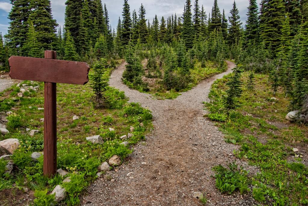 A path diverging in a wood, representing an opportunity for divestment and ESG investors