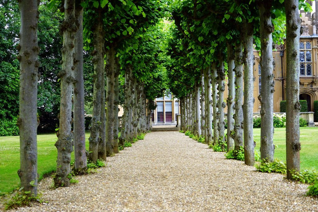 a pathway between trees represents the trees, making a will, who needs a will and the importance of a will