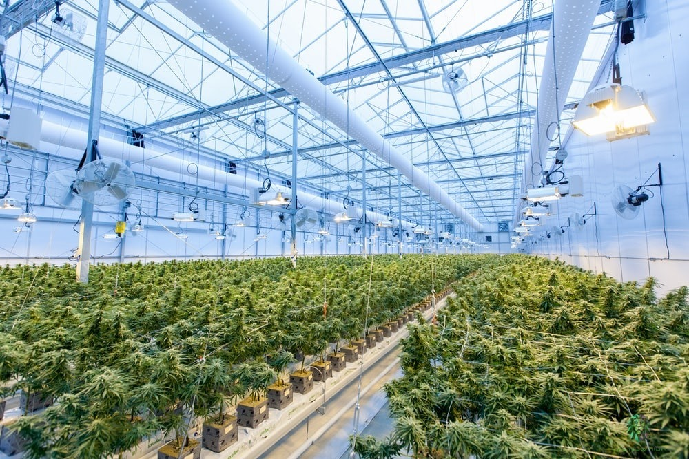 Blockchain for Cannabis Industry