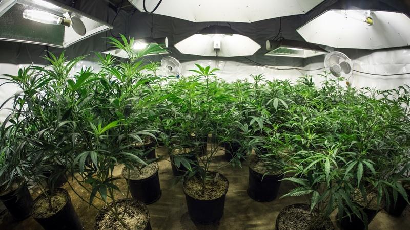 Cannabis Law 2020